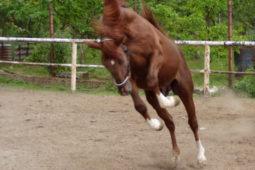 Jak jsme koně chovali