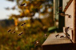 Jak jsme včelařit začali