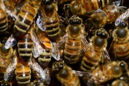 Jarní rozvoj našich včelstev
